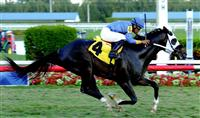 Broke his Maiden 2-1-2014 @ Gulfstream Park