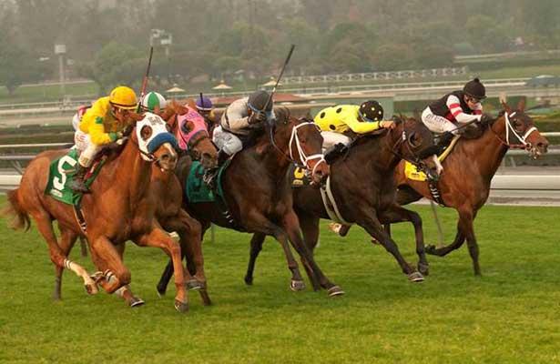 Magic Channel wins a downhill turf sprint at SA (1-30-14)