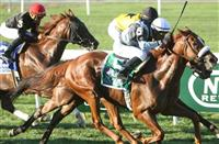 2014 Breeders' Cup Turf: Possible Runners
