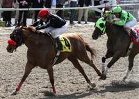 /horse/Mambo Galliano