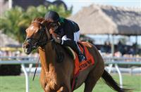 Manchurian High wins 2015 Sunshine Millions Turf.