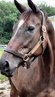 Marinda (now retired) Retraining as Dressage sporthorse
