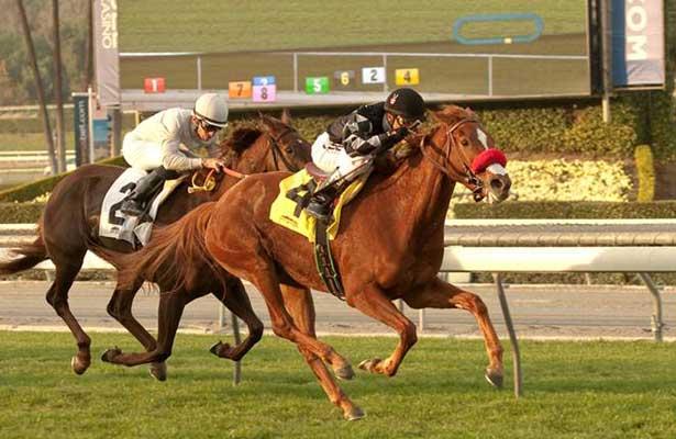 Miss Well Molded wins at Santa Anita (1-23-14).