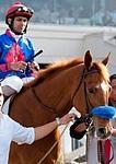 /horse/Mister Marti Gras
