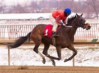 Moon Philly wins the 2013 Nellie Morse Stakes at Laurel Park on January 26, 2013.