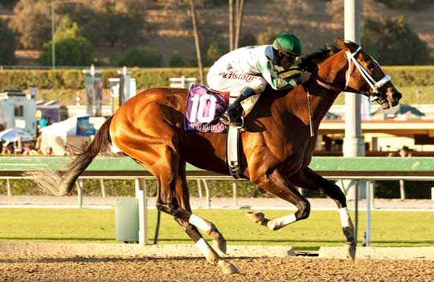 Mucho Macho Man wins 2013 Awesome Again Stakes.