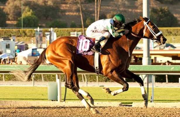 Mucho Macho Man wins 2013 Awesome Again Stakes.