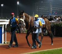 /horse/Musir
