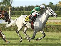 /horse/Musketier