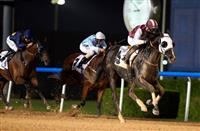 Need to Know trained by Ali Rashid Al Rayhi and ridden by Tadhg O'Shea win the featured Gulf News Conditions race at Meydan Racecourse on Thursday November 17, 2016