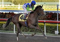 Nicanor, full brother to Barbaro, makes his racing debut