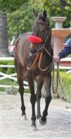 /horse/Norvsky