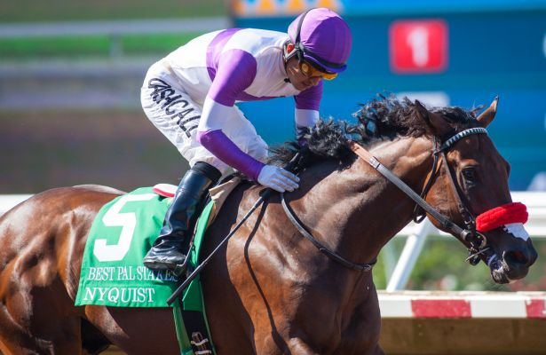 Eclipse Award 2015 Nyquist_Best_Pal_2015_615x400_orig