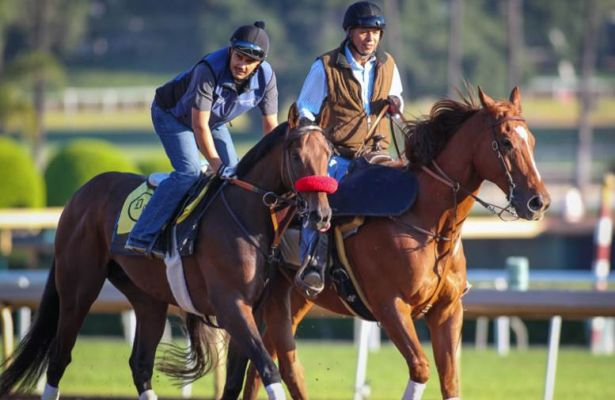 Nyquist Breezes Four Furlongs At Santa Anita Horse