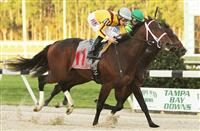 Ocean Knight Continues to Impress with Sam F. Davis Win
