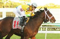 Ocean Knight expected to head Gotham Field