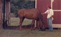 /horse/Onward John