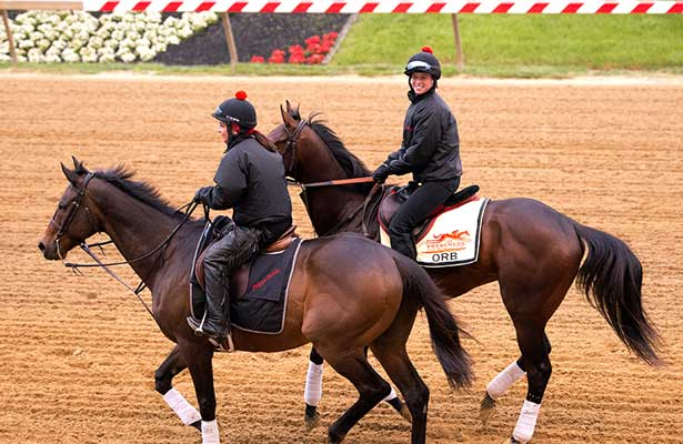 Orb, with exercise rider Jenn Patterson aboard, jogged at Pimlico Race Course on Wednesday, May 15 in preparation for Saturday's $1 million Preakness Stakes (G1).