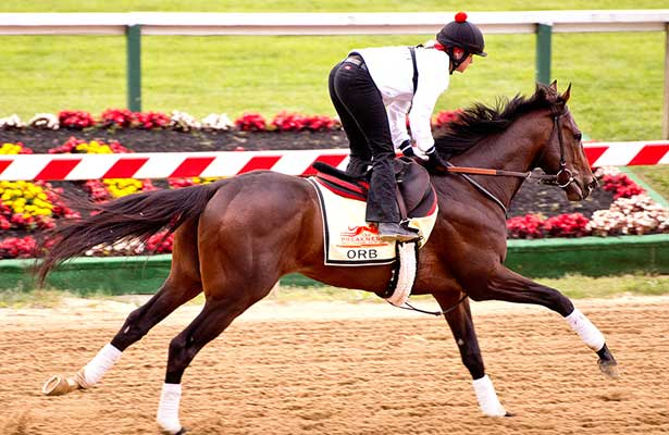 Orb exercises at Pimlico (5-16-13).