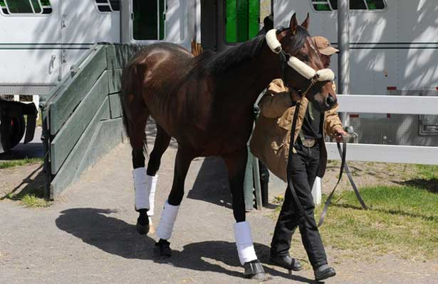 Orb arrives at Belmont Park (5-5-13).