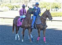 My Lil Shamrock 2013 California Oaks