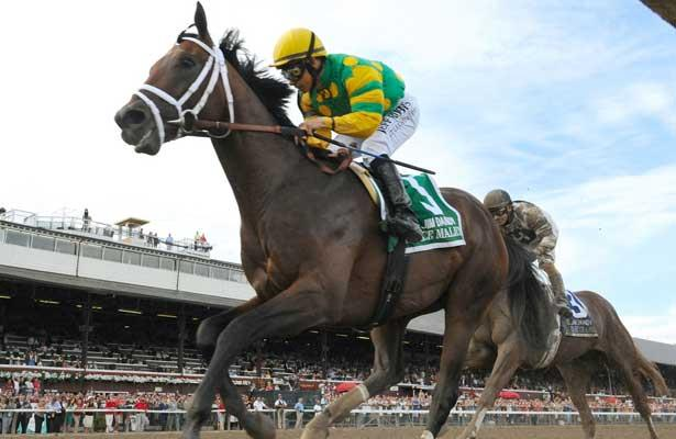 Palace Malice wins 2013 Jim Dandy Stakes.