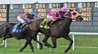 10 October 23: Pocket Cowboys (no. 4), ridden by Edgar Prado and trained by Scott Schwartz, wins the 32nd running of the Mohawk Stakes for New York bred three year olds and upward at Belmont Park in Elmont, New York. (Bob Mayberger/Eclipse Sportswire)