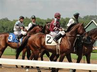 September 15, 2009: Prince Eddington in post parade for Sunny's Halo Stakes at Louisiana Downs.