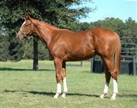 /horse/Prix De Karakorum