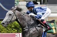 /horse/Platinum Skye