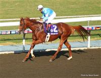 Casino Drive with Victor Espinoza 2008 Breeders Cup