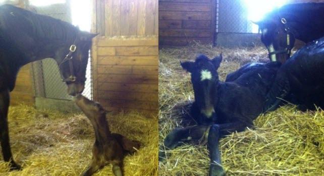 Rachel Alexandra's first foal