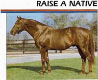 /horse/Raise A Native