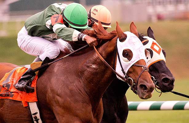 Roadhog nips Ben's Cat in 2013 MD Million Turf
