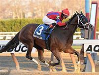 /horse/Royal Lahaina