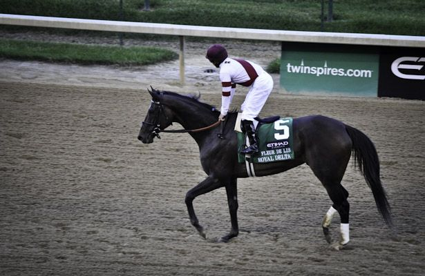 Royal Delta Tribute 615 X 400