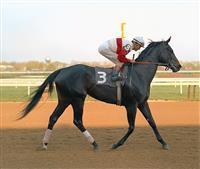 /horse/Ruffian