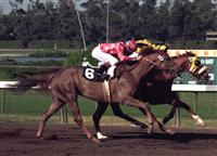 Sandy Blue winning the 1973 Hollywood Oaks