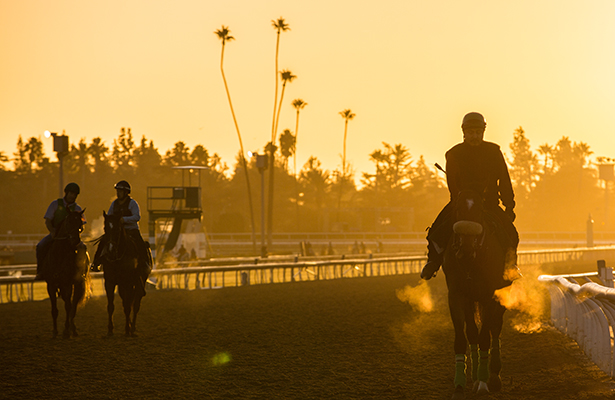 Santa Anita Morning Workouts Breeders' Cup 2013 week