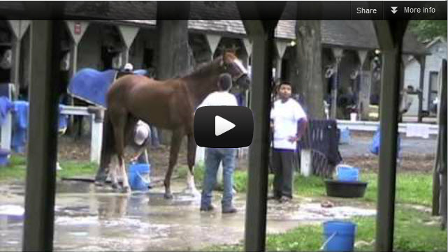 Saratoga Backstretch Video