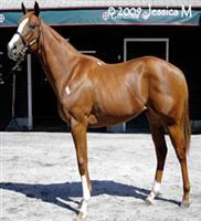 /horse/Saratoga Red