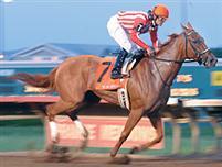 /horse/Secret Gypsy