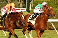 August 9, 2014: Seek Again with Joel Rosario win the Grade II Fourstardave Handicap for 3-year olds & up, going 1 mile on the turf at Saratoga Racetrack. Trainer: Bill Mott. Owner: Juddmonte Farms Inc.. Sue Kawczynski/ESW/CSM