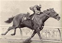 /horse/Silky Sullivan