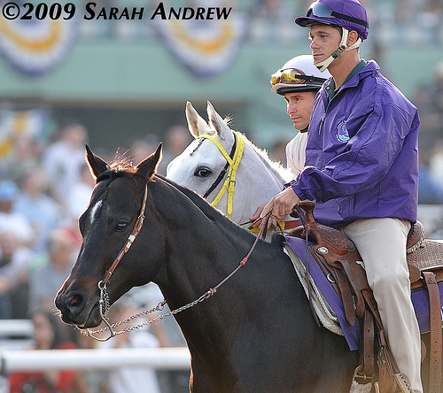 Silver Swallow before the 2009 Breeders' Cup