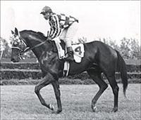 /horse/Sir Gaylord