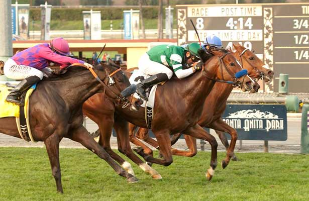 Sky High Gal wins 2014 Wishing Well Stakes