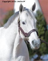 /horse/Smoke Glacken
