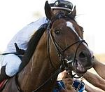 /horse/Societys Chairman