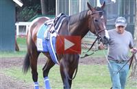 Songbird Prepares for the CCA Oaks [VIDEO]